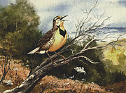 Bird Paintings - Eastern Meadowlark by Sam Sidders