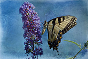 Butterfly On Flower Posters - Eastern Tiger Swallowtail Butterfly 2 Poster by Sandy Keeton