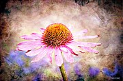 Cone Flower Digital Art Posters - Echinacea Coneflower Poster by Barbara Chichester