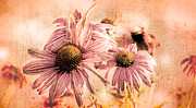 Maine Metal Prints - Echinacea Impressions  Metal Print by Bob Orsillo