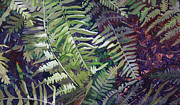 Fronds Paintings - Eco 11 by Cathy Ehrler