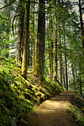 Enchanted Forest Posters - Ecola Trail Poster by Andrea Hazel Ihlefeld