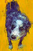Kelpie Painting Prints - Eddie Print by Carl Rolfe