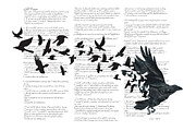 Sky Writer Prints - Edgar Alan Crow Print by Sassan Filsoof