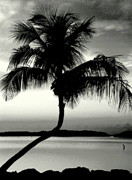 Silhouettes Metal Prints - EDGE of NIGHT in BW Metal Print by Karen Wiles