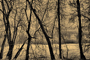 Old Tress Prints - Edge of Winter Print by Bob Orsillo