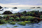 Bill Hudson - Eelgrass at Low Tide