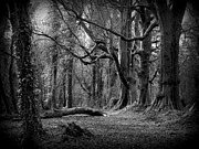 Backlit Photo Originals - Eerie Woods by Frances Hodgkins