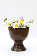 Egg-cup Framed Prints - Eggcup Daisies Framed Print by Anne Gilbert