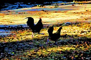 Roosters Photos - Eggscaping by Jan Amiss Photography