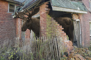 Moose Metal Prints - Egress Metal Print by Mark Zelmer