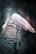 Bonnie Barry - Egret at Avery Island