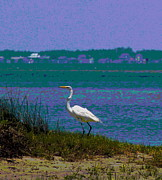 Beak Prints - Egret at Crystal Coast Print by Cathy Lindsey