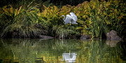 Chris Lord - Egret At The Lake