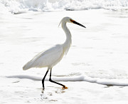 Plum Framed Prints - Egret Framed Print by Camille Lopez