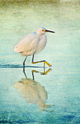 Joan McCool - Egret High Step