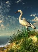 Daniel Eskridge - Egret in the Dunes