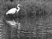 Suzy Piatt - Egret In The Thicket
