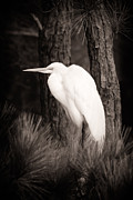 Michael McStamp - Egret