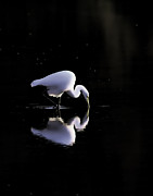 Jim Nelson Art - Egret Mirrored by Jim Nelson