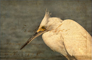 Eagle  Finegan  - Egret On Paper