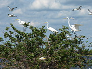 Appleton Prints - Egret Parents Print by Melissa Peterson