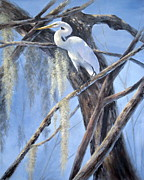Mary Mccullah Posters - Egret Perch Poster by Mary McCullah