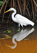 Florida Landscape Photography Prints - Egret Reflected in Orange Waters Print by Bruce Gourley