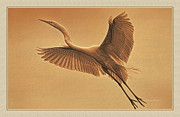 Grace Framed Prints - Egret Sepia Framed Print by Deborah Benoit