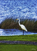 Skip Tribby Framed Prints - Egret Framed Print by Skip Tribby