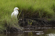 Wildlife Park Framed Prints - Egret Framed Print by Terry DeLuco