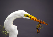 Palmer Hasty - Egret with Crawfish
