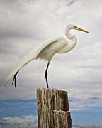 Fort Myers Beach Prints - Egret Yoga Print by Vicki Jauron