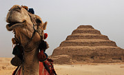 Camel Photos - Egypt Step Pyramid Saqqara by Bob Christopher