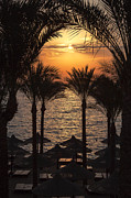 Tropical Sunset Framed Prints - Egypt sunrise Framed Print by Jane Rix