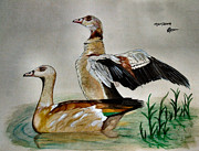 Geese Paintings - Egyptian Geese by Tracey Beer