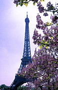 Europe Framed Prints Framed Prints - Eiffel with Blossoms Framed Print by Kathy Yates