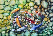 Koi Painting Posters - Eight Koi Fish Playing with Bubbles Poster by Zaira Dzhaubaeva