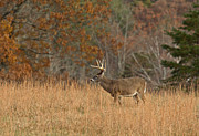 Hunted Photos - Eight Pointer II by Douglas Stucky