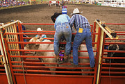 Bull Riders Photos - Eight Seconds To Payday by Bob Christopher
