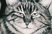 Black And White Cats Pastels - El Gato by Billie Colson