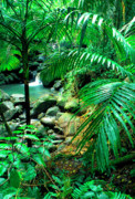 Tropical Rainforest Art - El Yunque Palm Trees and Waterfall by Thomas R Fletcher