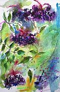 Ginette Fine Art LLC Ginette Callaway - Elderberries Holunder Beeren Wild Fruit