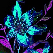 Original Pen And Ink Drawing Prints - Electric Blue Stargazer Print by Laura Wilson