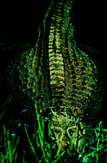 Alligator Prints - Electric Green Print by Emily Stauring