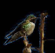 Desert Pyrography Metal Prints - Electric Humming bird Metal Print by Justin Paige