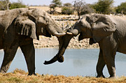 Elephants Metal Prints - Elefriends Metal Print by Alison Kennedy-Benson