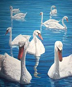 Swans... Drawings - Elegance by Stephen Rea