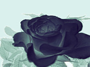 Natures Flower Garden Mixed Media Posters - Elegant Black Rose Poster by Debra     Vatalaro