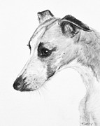 Charcoal Dog Drawing Drawings Posters - Elegant Whippet Poster by Kate Sumners